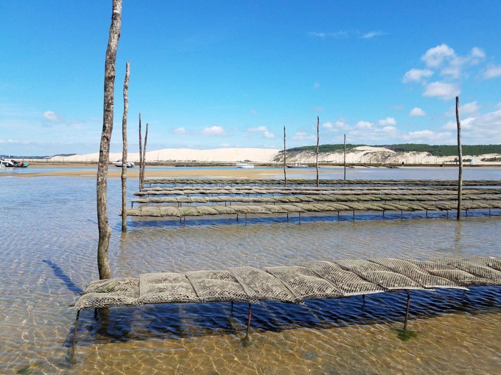 Bassin d'arcachon huître